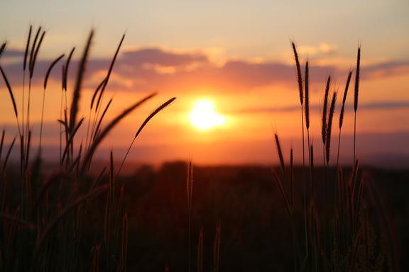 sunset - bp coyle