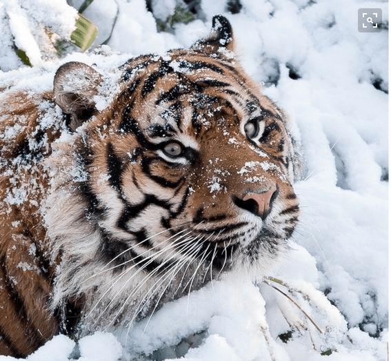 10 Especies animales en peligro de extinción que podrían desaparecer en 2016