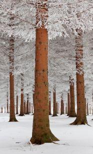 winter10