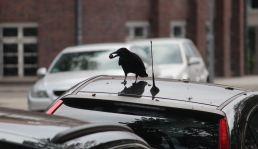 Vogelkundliche Wanderung ; Foto: Roland Klemm