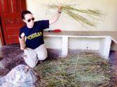 Morgan working on the farm