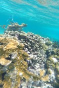 an amazing underwater coral garden