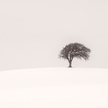 tree-in-snow-square-dark-sepia-display-sharp