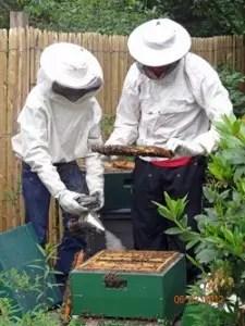 Bienen EFSA