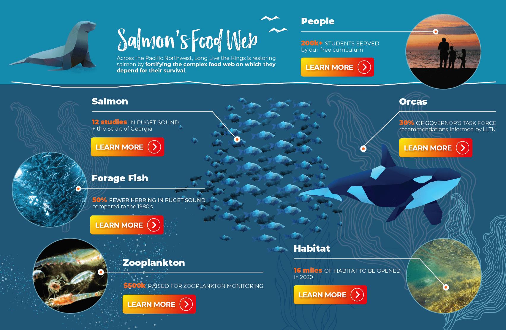 Salmon's Food Web