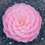 【美麗】まるで芸術作品? 道端に落ちていた花が「あまりにも完璧すぎる造形美」だった