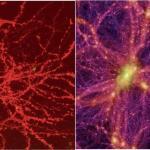 【人体】やはり、脳と宇宙の構造は似ている……最新研究 同様のネットワーク力学の原理によって形成されている可能性 ★2  [ごまカンパチ★]