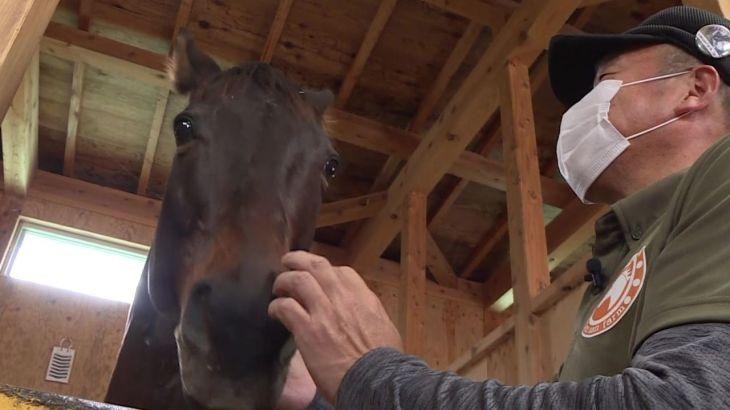 """【島根】年間7000馬、引退した競走馬は9割殺処分の現実…元競走馬を積極的に受け入れる牧場には""""ディープインパクトの子供""""もいた  [ばーど★]"""