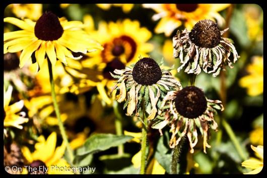 flowers-907