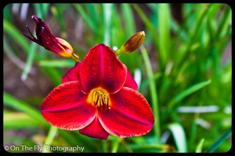 flowers-917