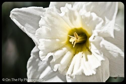 flowers-919