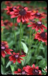 flowers-920