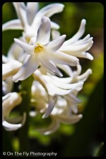 flowers-921