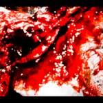 Fort Collins Zombie Crawl 2011: Ms. Zombie photoshoot