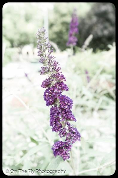 2015-07-21-0502-Flowers