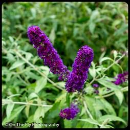 2015-07-21-0504-Flowers