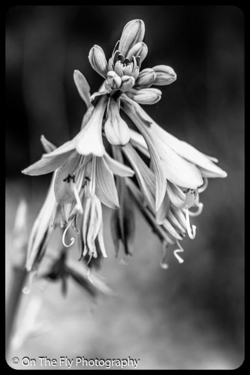 2015-07-21-0507-Flowers