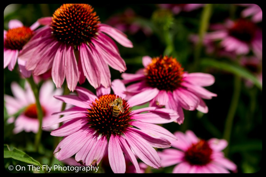 2015-07-21-0521-Flowers