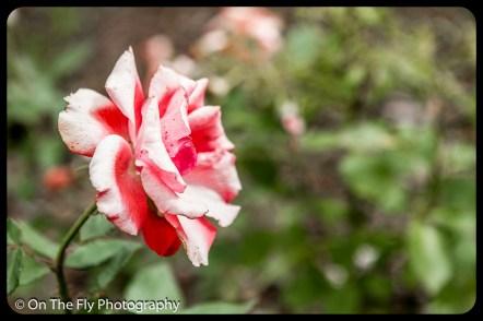 2015-07-21-0528-Flowers