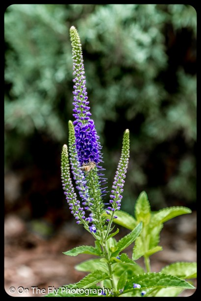 2015-07-21-0534-Flowers