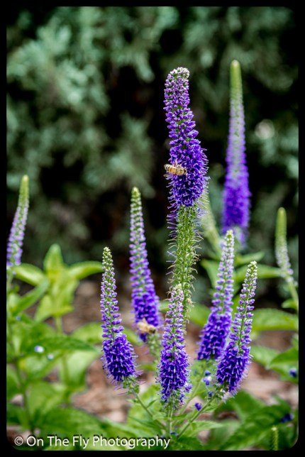 2015-07-21-0537-Flowers