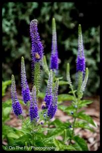 2015-07-21-0538-Flowers