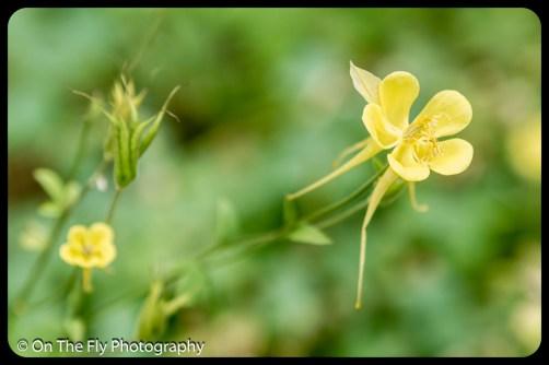 2015-07-21-0547-Flowers