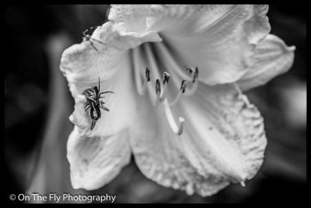 2015-07-21-0551-Flowers