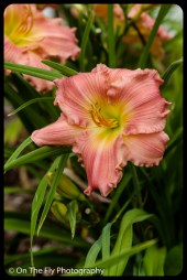 2015-07-21-0556-Flowers