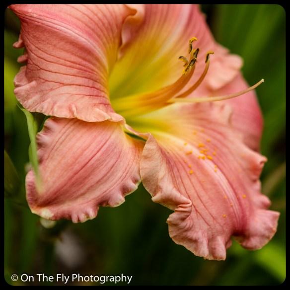 2015-07-21-0558-Flowers