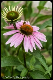 2015-07-21-0563-Flowers