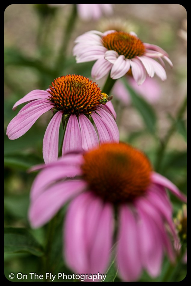 2015-07-21-0567-Flowers