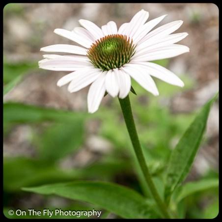 2015-07-21-0572-Flowers