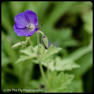 2015-07-21-0582-Flowers