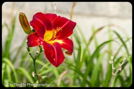2015-07-21-0586-Flowers