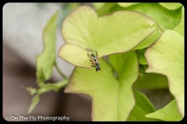2015-07-21-0588-Flowers