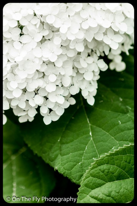 2015-07-21-0593-Flowers