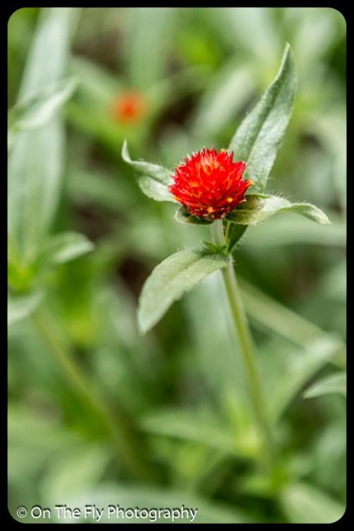 2015-07-21-0600-Flowers