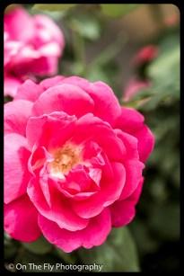 2015-07-21-0604-Flowers