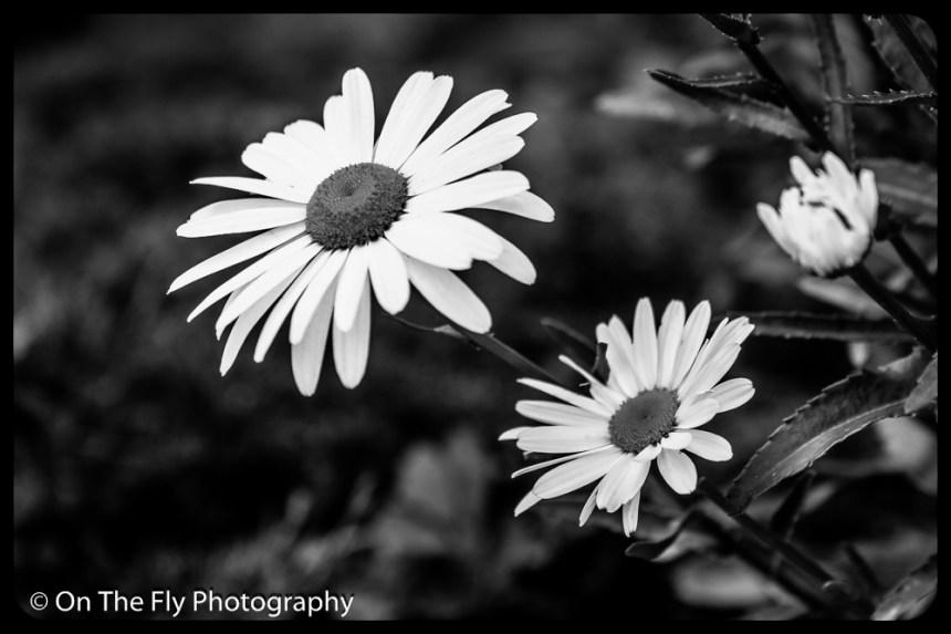 2015-07-21-0608-Flowers