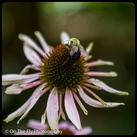 2015-08-02-0026-Flowers