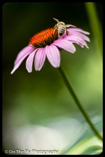 2015-08-02-0041-Flowers