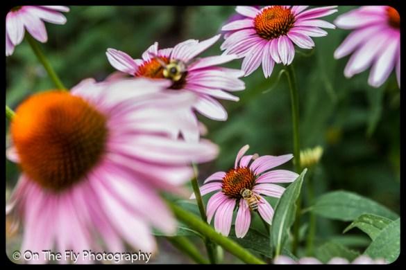 2015-08-02-0064-Flowers