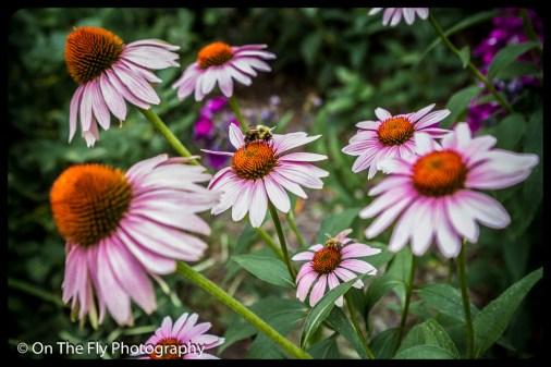 2015-08-02-0067-Flowers