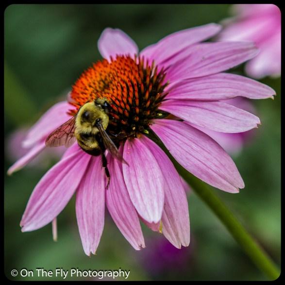 2015-08-02-0072-Flowers