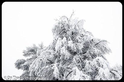 LD-Gerald-Snow-0005-2020-04-16