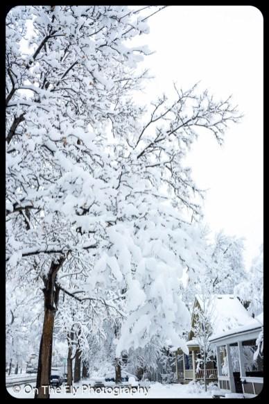LD-Gerald-Snow-0008-2020-04-16