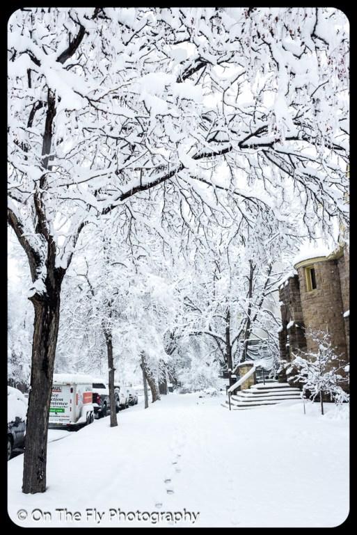 LD-Gerald-Snow-0013-2020-04-16