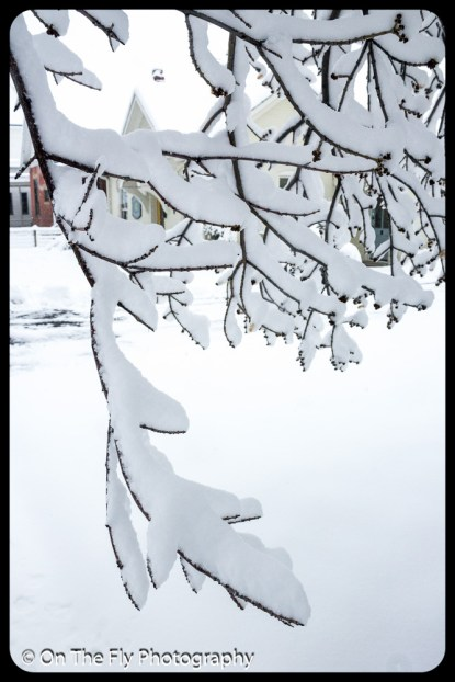 LD-Gerald-Snow-0018-2020-04-16