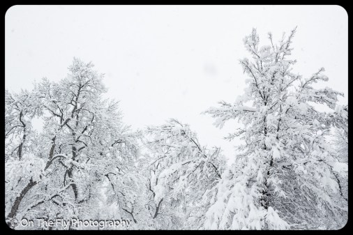 LD-Gerald-Snow-0039-2020-04-16